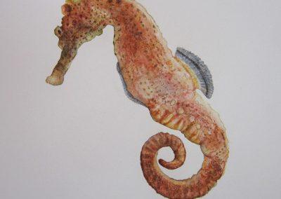Hipocampo. Caballito de mar).
